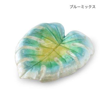 画像2: カピストレイ モンステラリーフ 貝殻 インテリア雑貨 アクセサリートレイ 小物入れ 会計皿 ハワアイアン雑貨